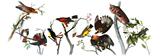 226º Aniversário de John James Audubon